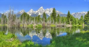 dying trees in Teton National Park is climate change impacting daily life